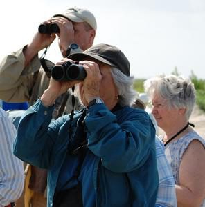 group of birders birdwatching nature with binoculars in glaveston island texas