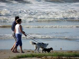 couple walking with dogs on galveston island beach