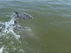 dolphin watching in galveston tx