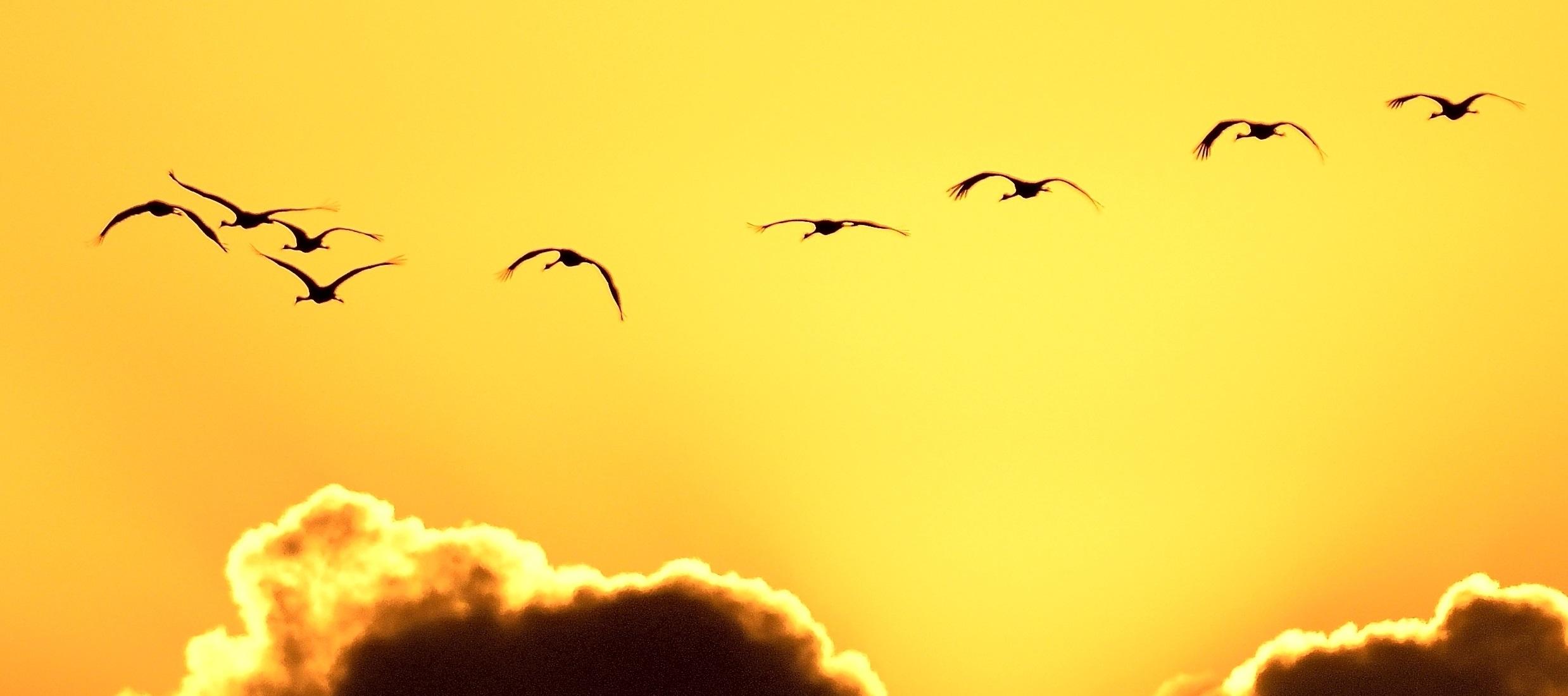 Galveston Island Sunset and Birds
