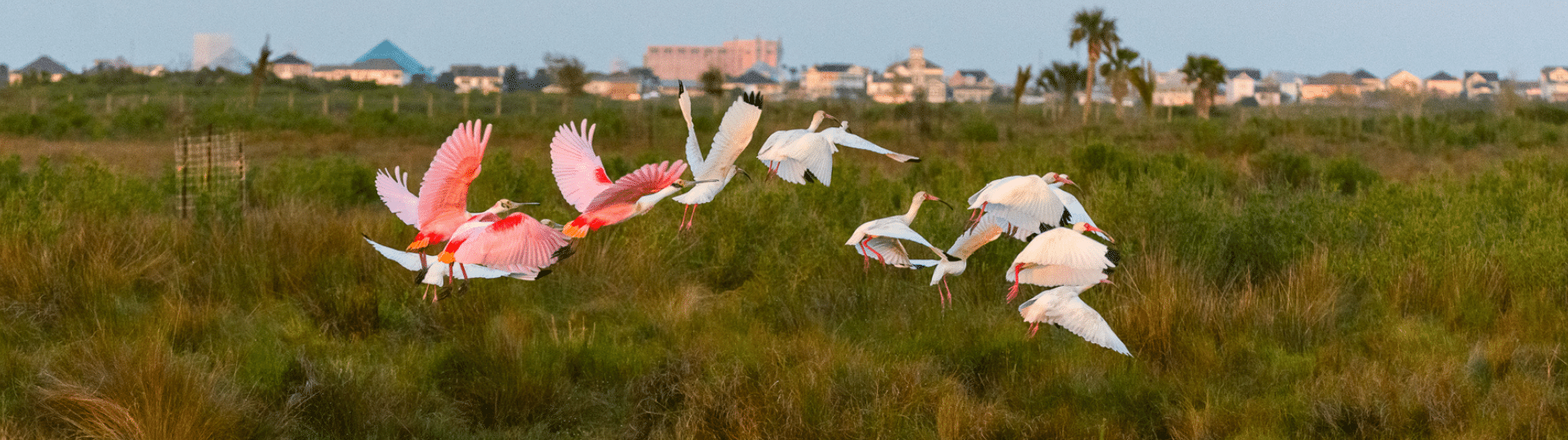 Birds flying over Galveston TX