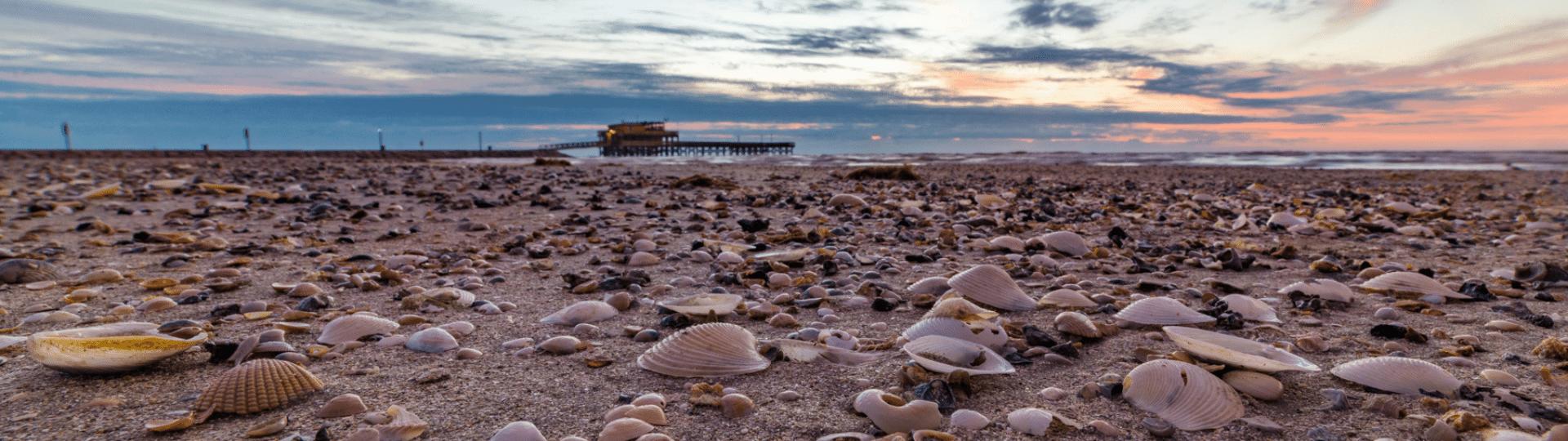 Shells on beach in Galveston TX