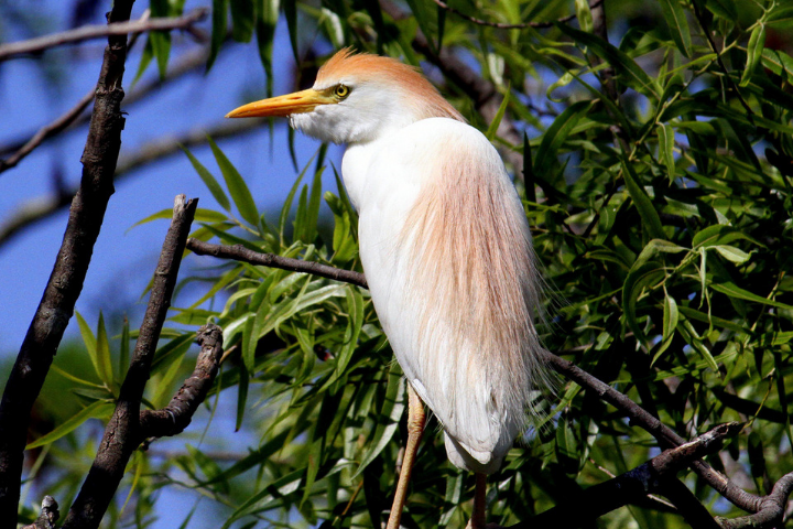 White bird perched in a green tree.