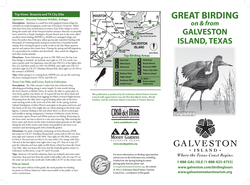 brochure related to birding in galveston texas